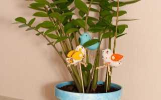 Дизайн цветочных горшков своими руками
