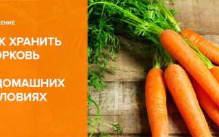 Где хранить морковь в квартире