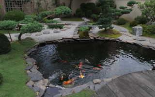 Рыбалка на даче: как сделать пруд для разведения рыбы?