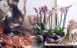 Орхидеи в интерьере: описание с фото, отзывы, советы