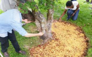 Применение древесных опилок в саду и на огороде