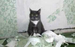 Как отучить кошку драть обои: что делать кот царапает мебель, обои которые не дерут кошки, защитить стены, жидкие обои и кошки, чем отделать стены