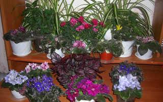 Любит-не любит (гадание на ромашке) или можно ли не любить комнатные цветы?