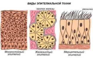 Виды тканей – какие бывают ткани, их классификация, название, состав