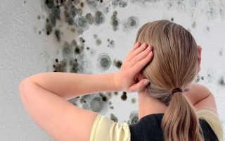 Грибок на стенах в доме