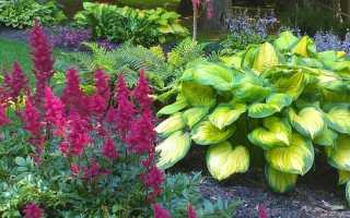 Декоративные растения и цветы для тенистого сада: как сделать цветник в тени