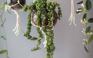 Макраме кашпо для цветов: схемы плетения и пошаговое изготовление
