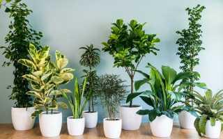 Как выбрать комнатные растения для дома: некоторые рекомендации
