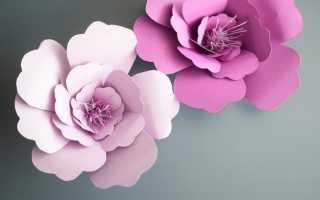 Бумажные цветы: описание с фото, советы